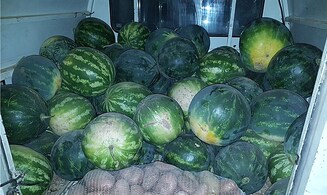 Bedouin man steals dozens of watermelons from Jewish farmer