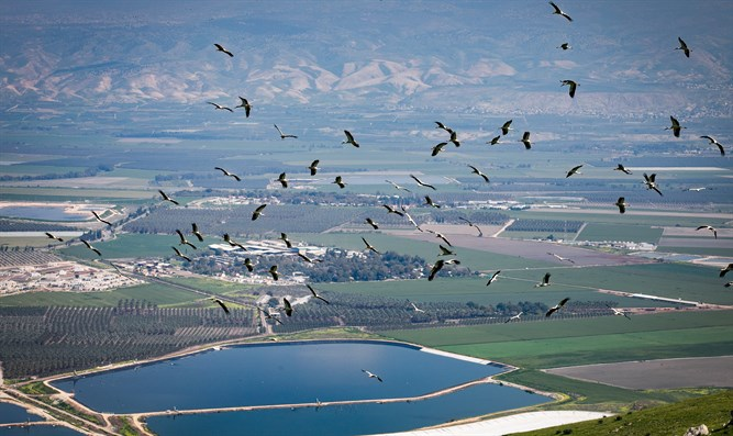 Storks fly over Beit Shean Valley in northern Israel