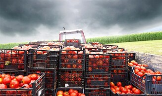 Farmers threaten to go to Supreme Court over Turkish tomatoes